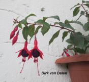 Dirk van Delen